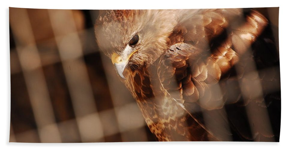 Prisoner Hawk Hand Towel featuring the photograph Prisoner Hawk by Gina Dsgn