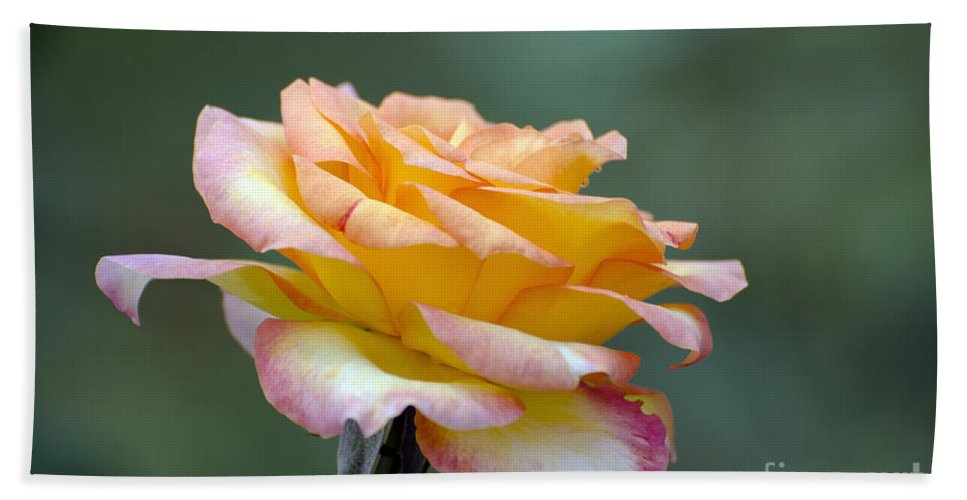 Rose Bath Sheet featuring the photograph Profile View Yellow And Pink Rose by Terri Winkler