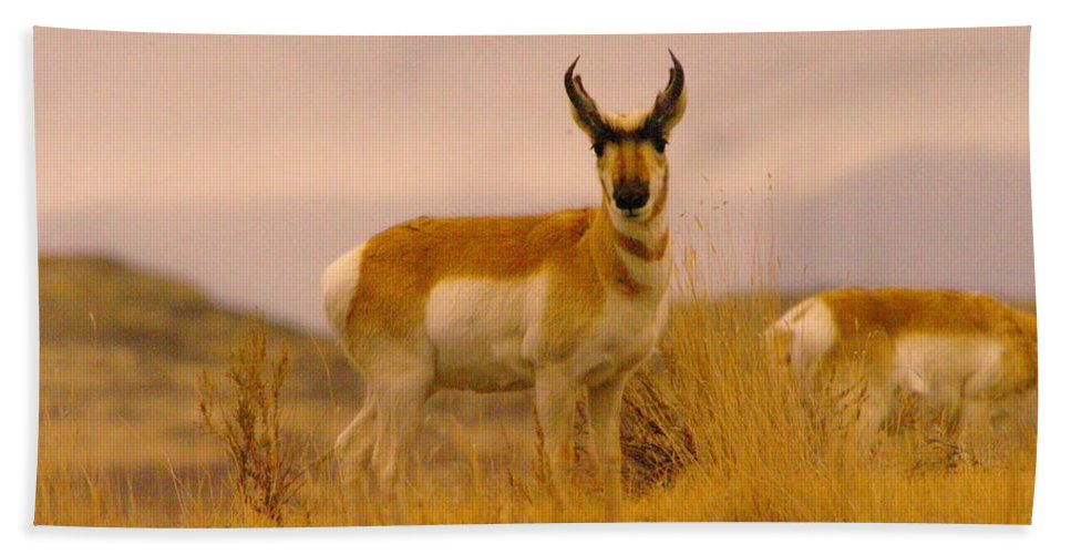 Pronghorn Bath Sheet featuring the photograph Pronghorn by Jeff Swan