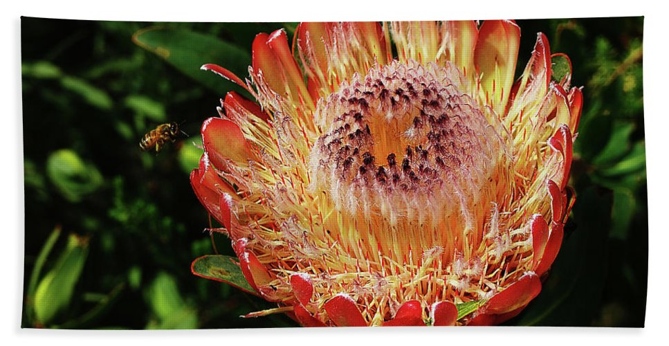 Protea Hand Towel featuring the photograph Protea Flower 2 by Xueling Zou