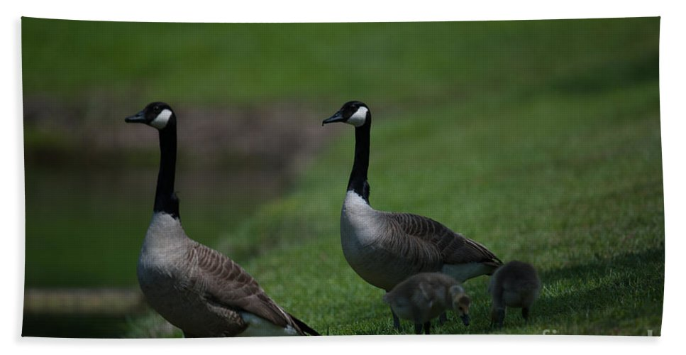 Geese Bath Sheet featuring the photograph Protect Their Babies by Dale Powell
