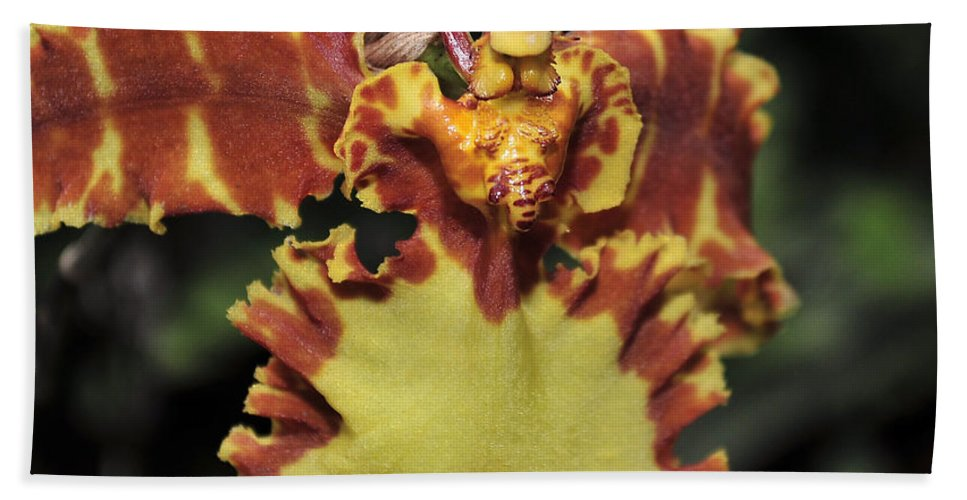 Brown Orchid Bath Sheet featuring the photograph Psychopsis Krameriana by Terri Winkler