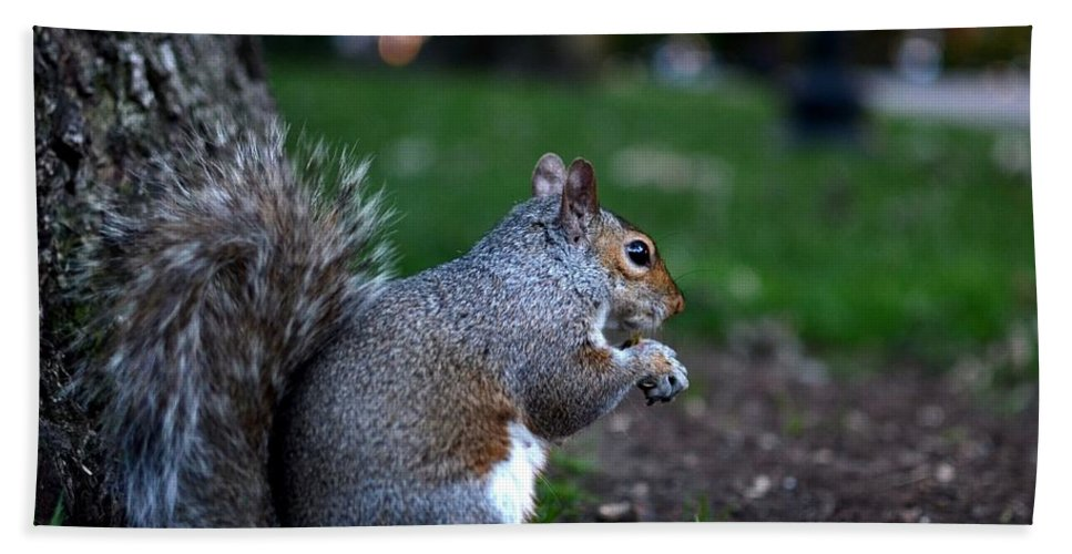 Squirrel Hand Towel featuring the photograph Public Garden Squirrel by Toby McGuire