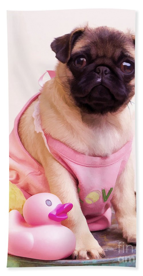 Pug Pink Dog Pet Puppy Puppies Cute Adorable Portrait Duckie Duck Bathtime Bath Wash Dress Clothed Clothing Bath Sheet featuring the photograph Pug Puppy Bath Time by Edward Fielding