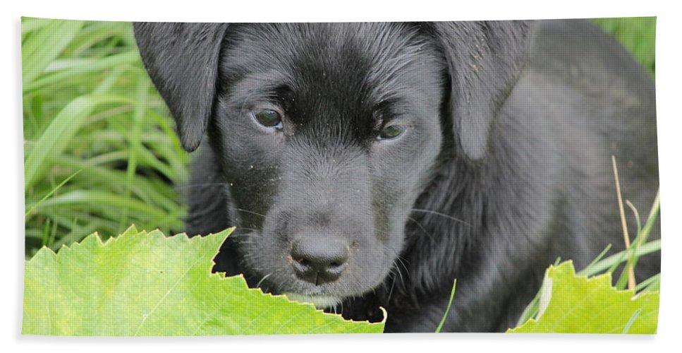 Puppy Bath Sheet featuring the photograph Puppy Love by Tiffany Erdman