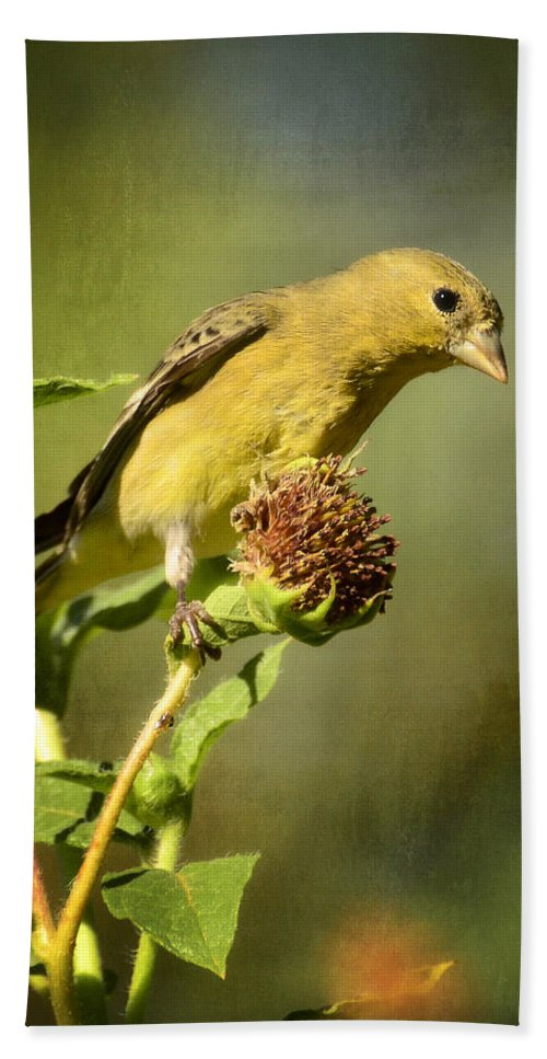 Lesser Goldfinch Bath Sheet featuring the photograph Pure Gold by Saija Lehtonen