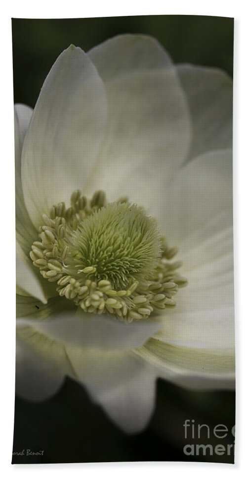 Flower Hand Towel featuring the photograph Pureness In White by Deborah Benoit
