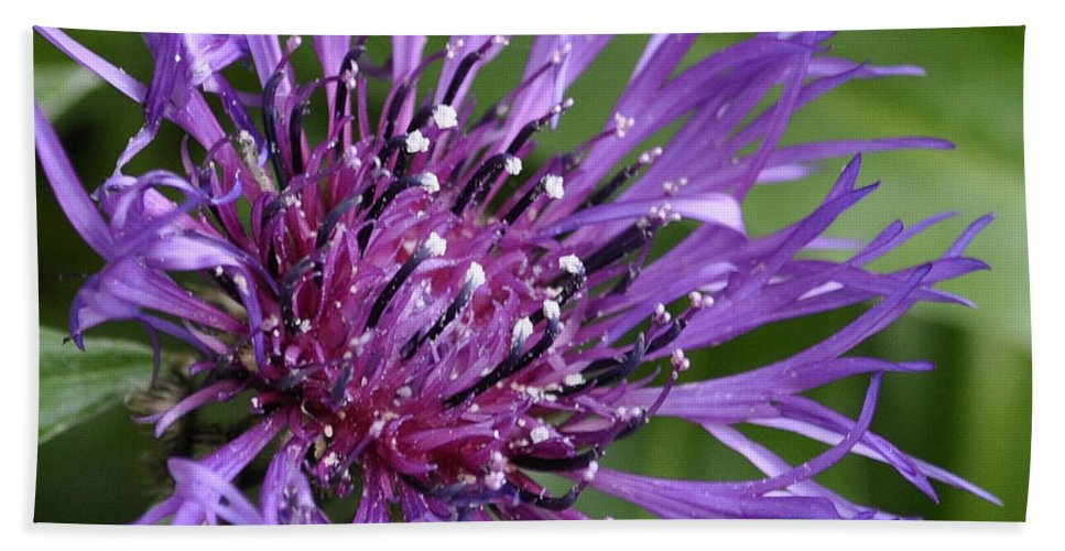 Flower Bath Sheet featuring the digital art Purple Passion by Jim Brage