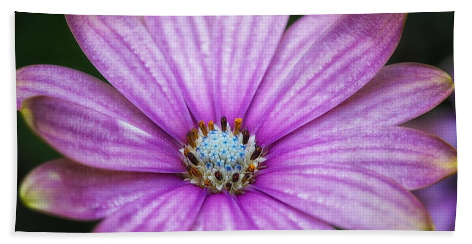 Color Bath Sheet featuring the photograph Purple African Daisy by Eti Reid