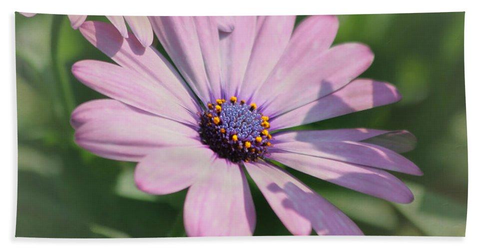 Purple Flower Hand Towel featuring the photograph Purple African Daisy by Kim Hojnacki