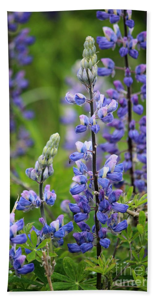 Lupines Hand Towel featuring the photograph Purple Alaskan Lupines by Stacey May
