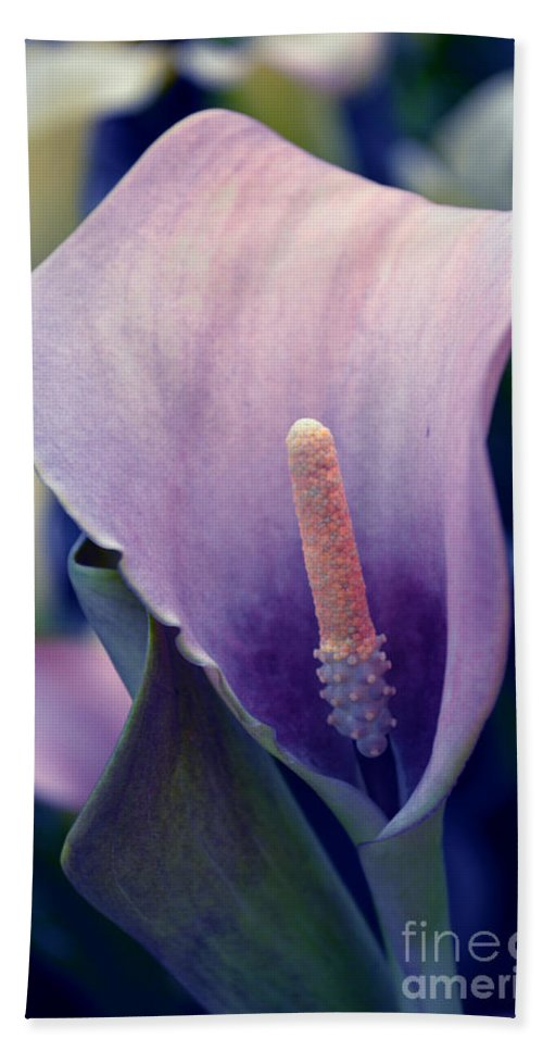 Calla Hand Towel featuring the photograph Purple Calla Flower by Susanne Van Hulst