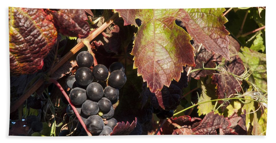 Napa Valley California Wineries Winery Cluster Clusters Grape Grapes Grapevine Grapevines Vine Vines Leaf Leaves Food Vineyard Vineyards Hand Towel featuring the photograph Purple Cluster by Bob Phillips