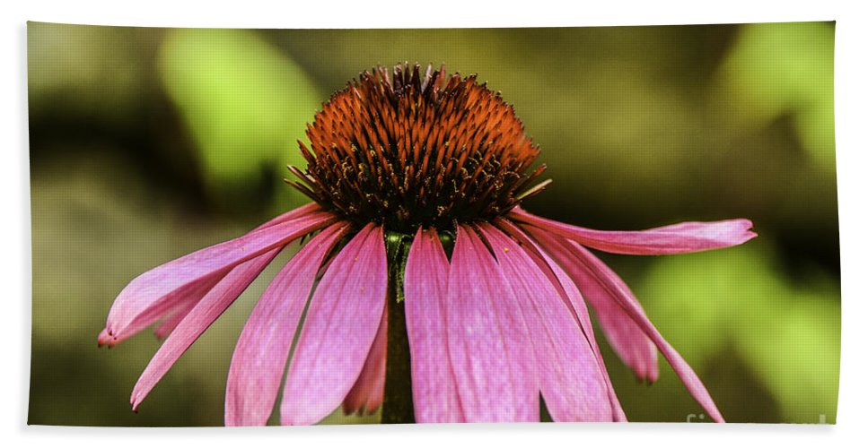 M C Story Hand Towel featuring the photograph Purple Coneflower - Single by Mary Carol Story