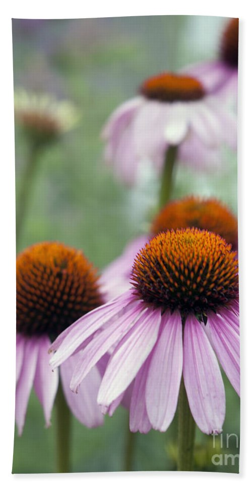 Beauty In Nature Hand Towel featuring the photograph Purple Coneflower by Juli Scalzi