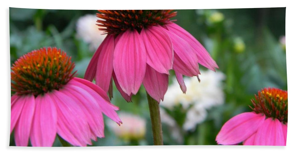 Floral Hand Towel featuring the photograph Purple Coneflowers by Tammy Garner
