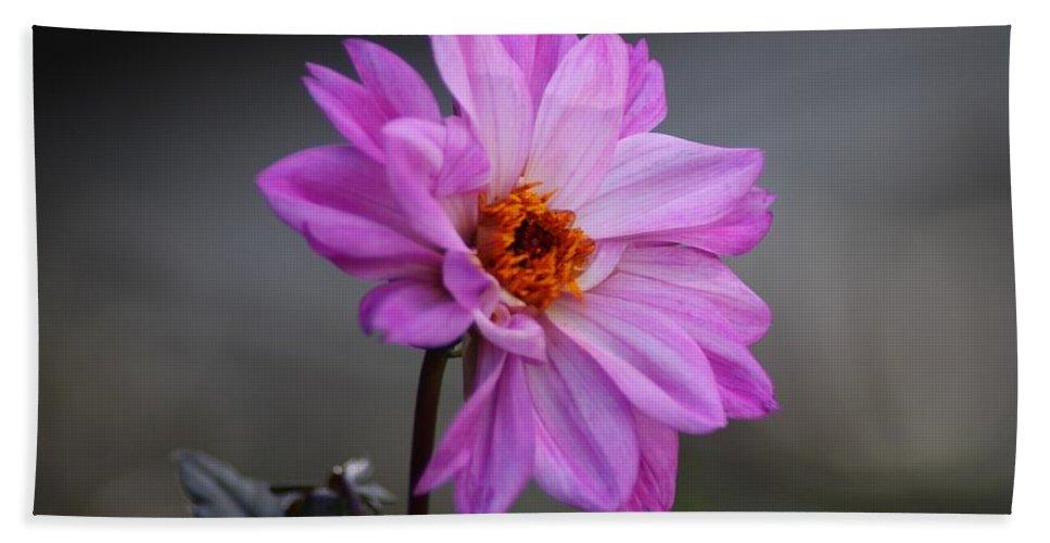 Flower Hand Towel featuring the photograph Purple Daisy by Cynthia Guinn