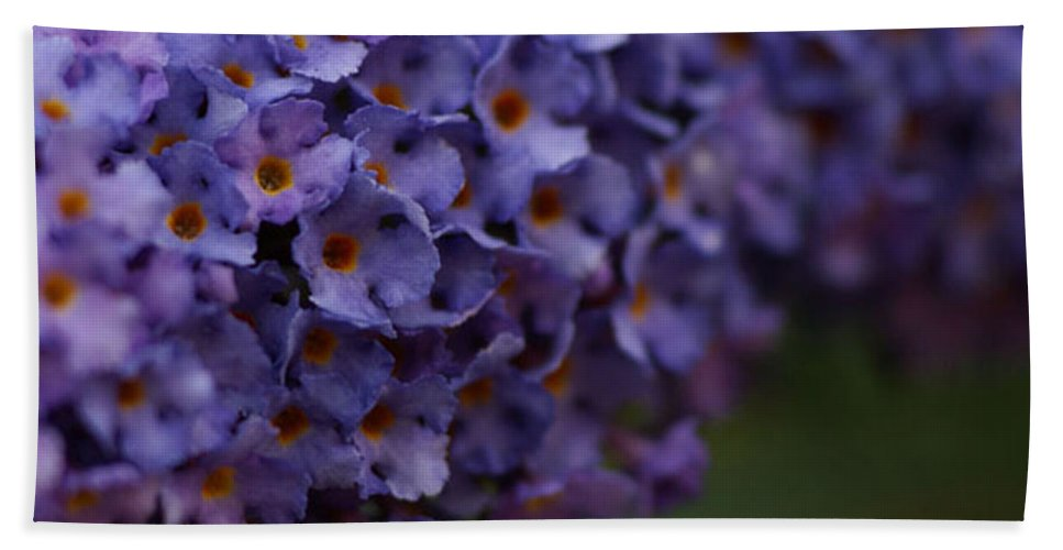 Purple Hand Towel featuring the photograph Purple Flowers 1 by Carol Lynch