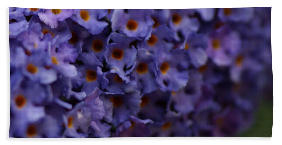 Purple Hand Towel featuring the photograph Purple Flowers 2 by Carol Lynch