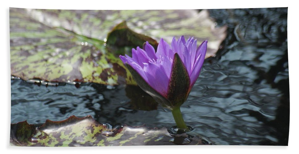 Purple Bath Sheet featuring the photograph Purple Glory by Rob Luzier