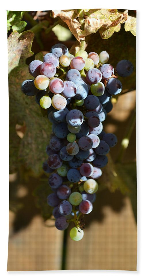 Purple Bath Sheet featuring the photograph Purple Grapes by Holly Blunkall