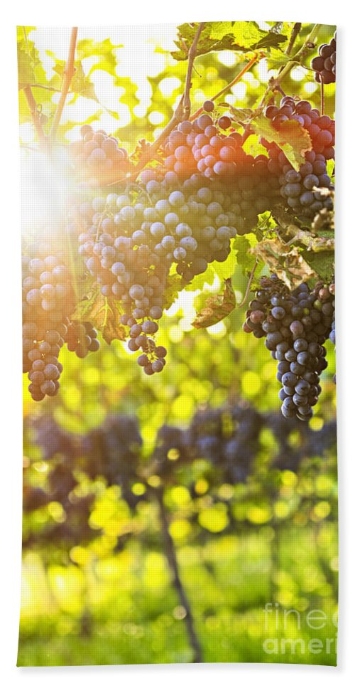 Red Bath Sheet featuring the photograph Purple Grapes In Sunshine by Elena Elisseeva