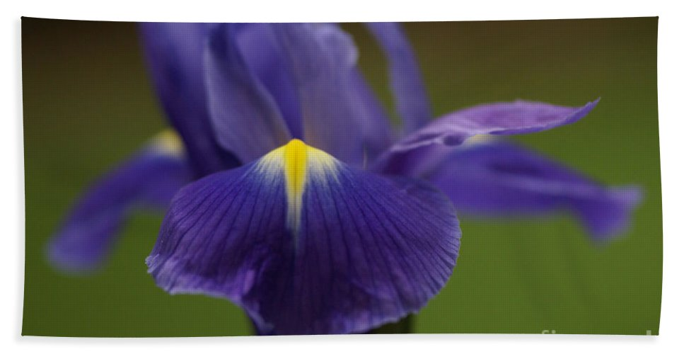 Purple Bath Sheet featuring the photograph Purple Iris 6 by Carol Lynch