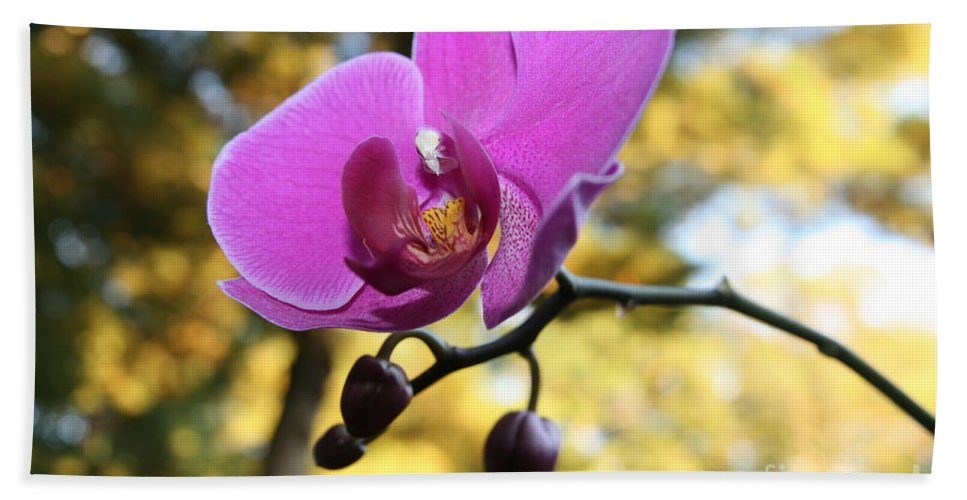 Purple Orchid Bath Sheet featuring the photograph Purple Orchid In September Sun by Neal Eslinger