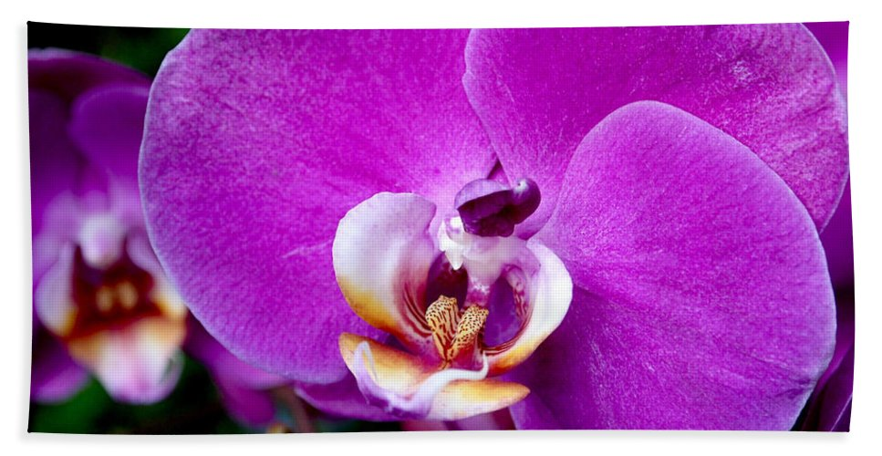 Orchid Bath Towel featuring the photograph Purple Orchid by Rona Black