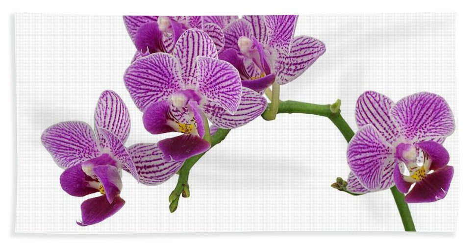 Orchid Hand Towel featuring the photograph Purple Orchid-3 by Rudy Umans