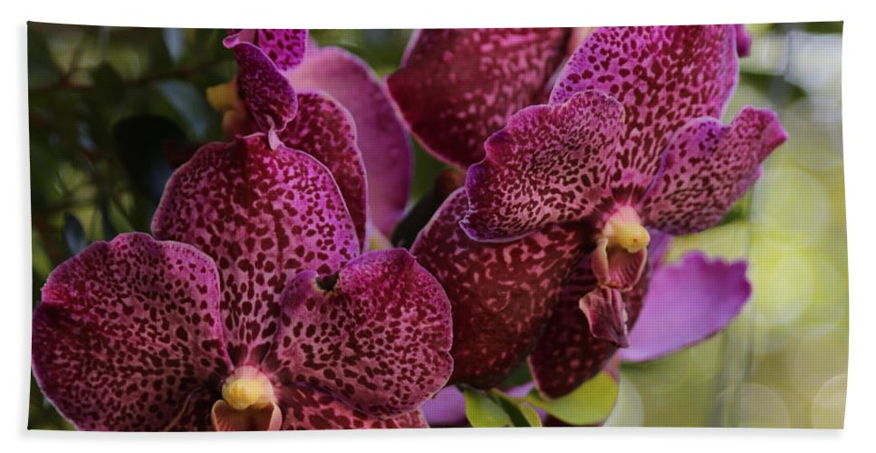Orchid Bath Sheet featuring the photograph Purple Orchids With Bokeh by Carol Groenen