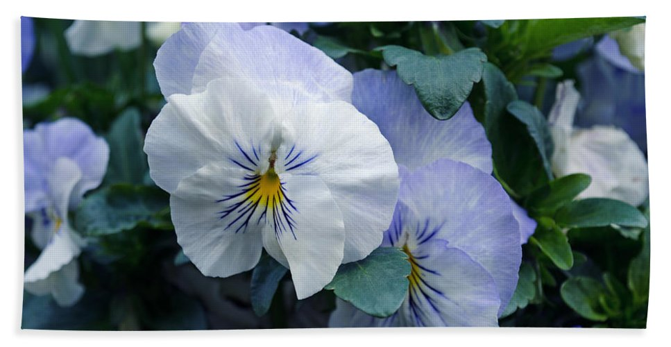 Purple Bath Sheet featuring the photograph Purple Pansies by Tikvah's Hope