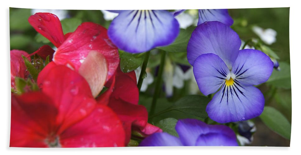 Floral Scene Hand Towel featuring the photograph Purple Pansy Flowers By Line Gagne by Line Gagne
