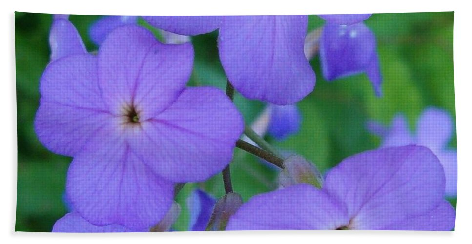 Flowers Hand Towel featuring the photograph Purple Passion by Sara Raber