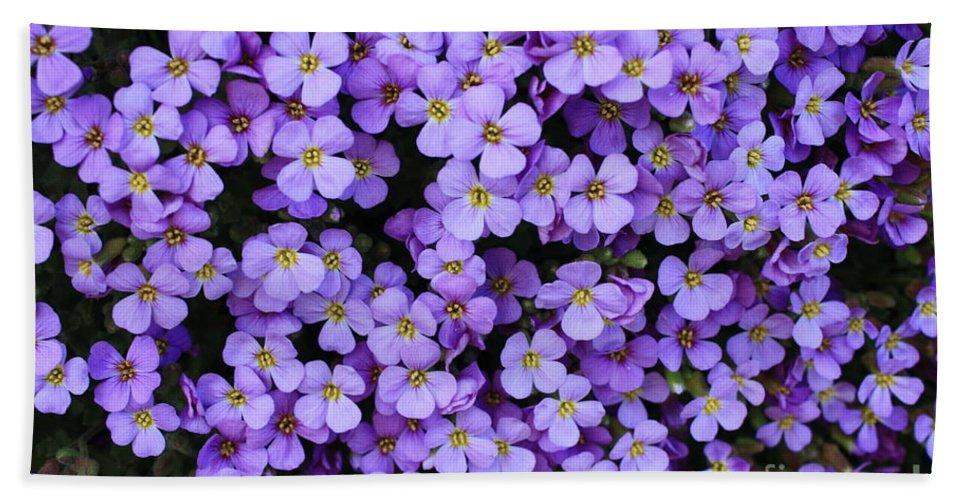 Rockcress Hand Towel featuring the photograph Purple Rockcress by Carol Groenen