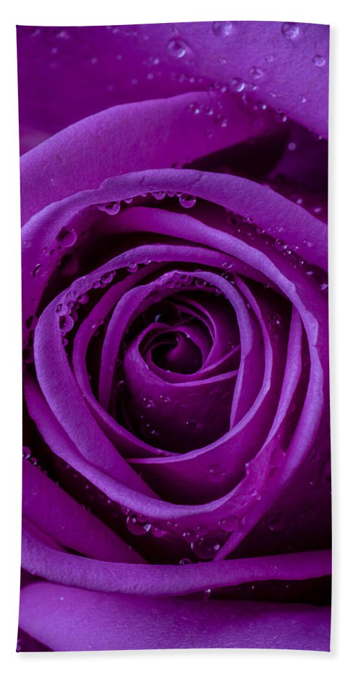 Purple Hand Towel featuring the photograph Purple Rose Close Up by Garry Gay