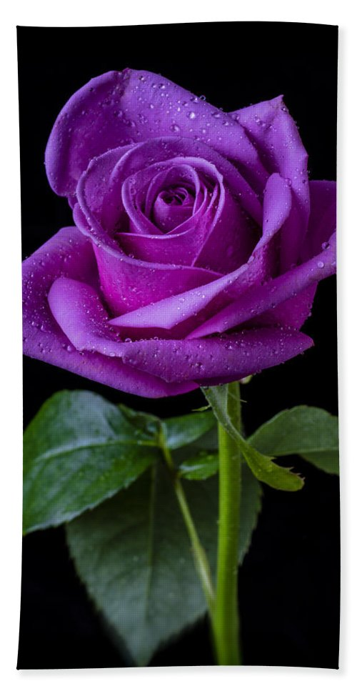 Purple Hand Towel featuring the photograph Purple Rose by Garry Gay