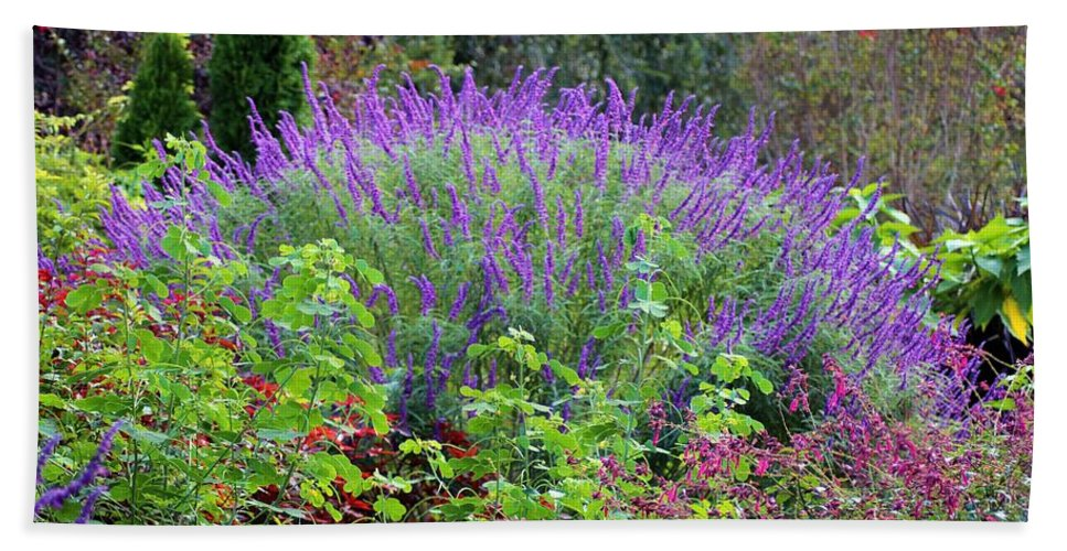 Purple Salvia Hand Towel featuring the photograph Purple Salvia In The Garden by Cynthia Guinn