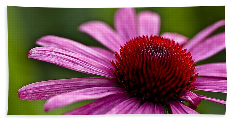 Longwood Gardens Bath Sheet featuring the photograph Purples And Reds by Samantha Eisenhauer