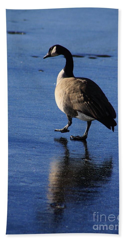 Goose Bath Sheet featuring the photograph Put Your Best Foot Forward by Alyce Taylor