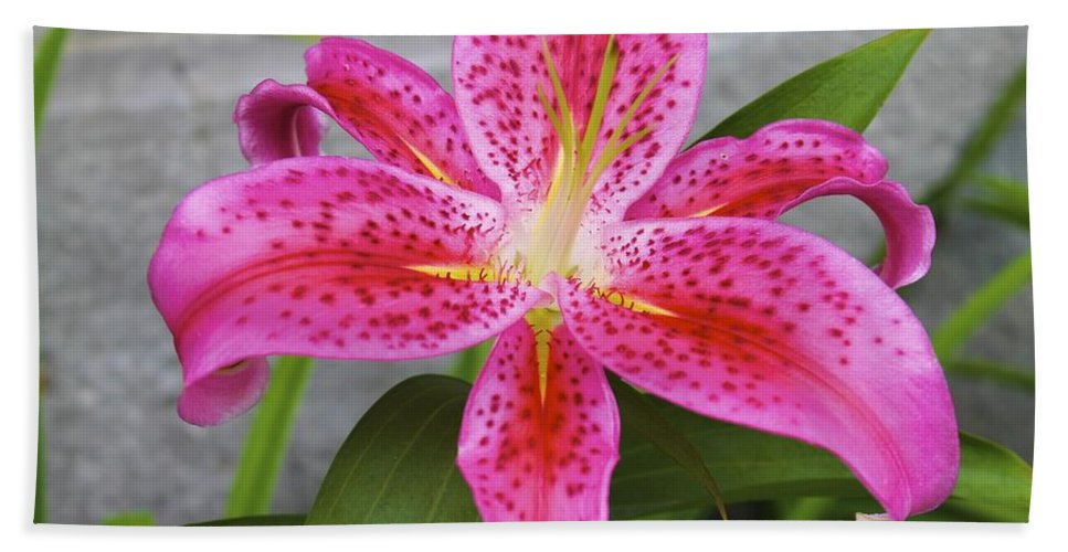 Flowers Bath Sheet featuring the photograph Qcpg 13-002 by Mario MJ Perron