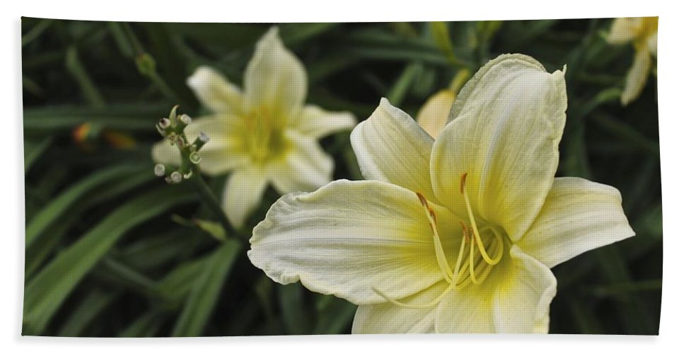 Flowers Bath Sheet featuring the photograph Qcpg 13-006 by Mario MJ Perron