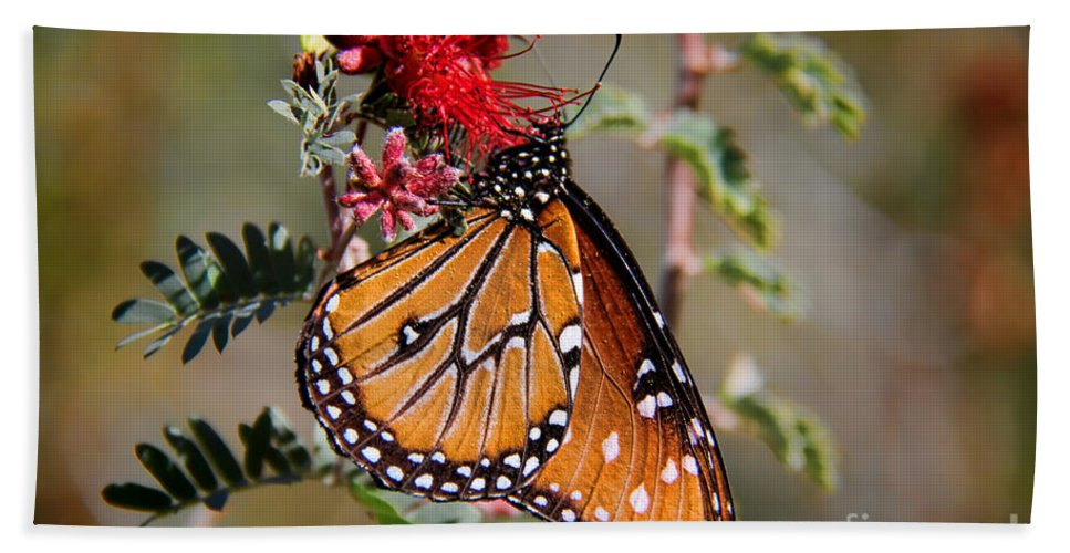 Queen Butterfly Hand Towel featuring the photograph Queen Butterfly by Mariola Bitner