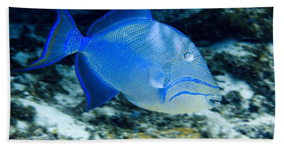 Queen Triggerfish Bath Sheet featuring the photograph Queen Triggerfish by Jim Murphy