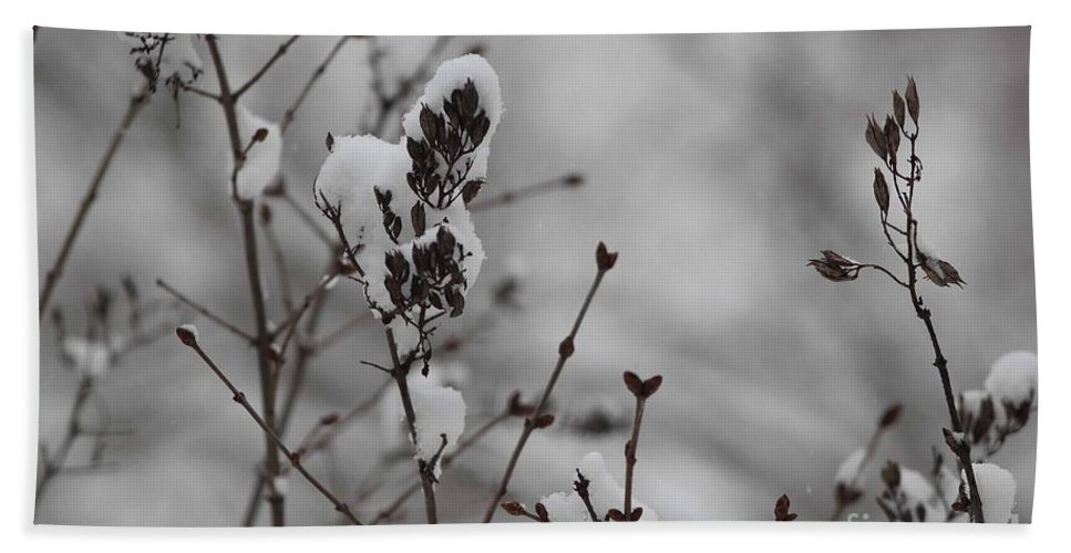 Snow Hand Towel featuring the photograph Quiet Winter by Stephanie Hanson