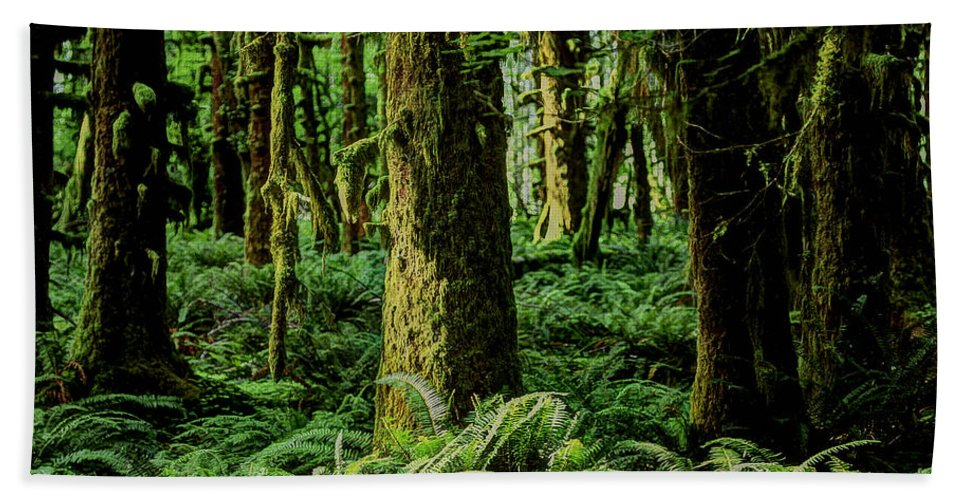 Quinault Rainforest Hand Towel featuring the photograph Quinault Rainforest by Ingrid Smith-Johnsen