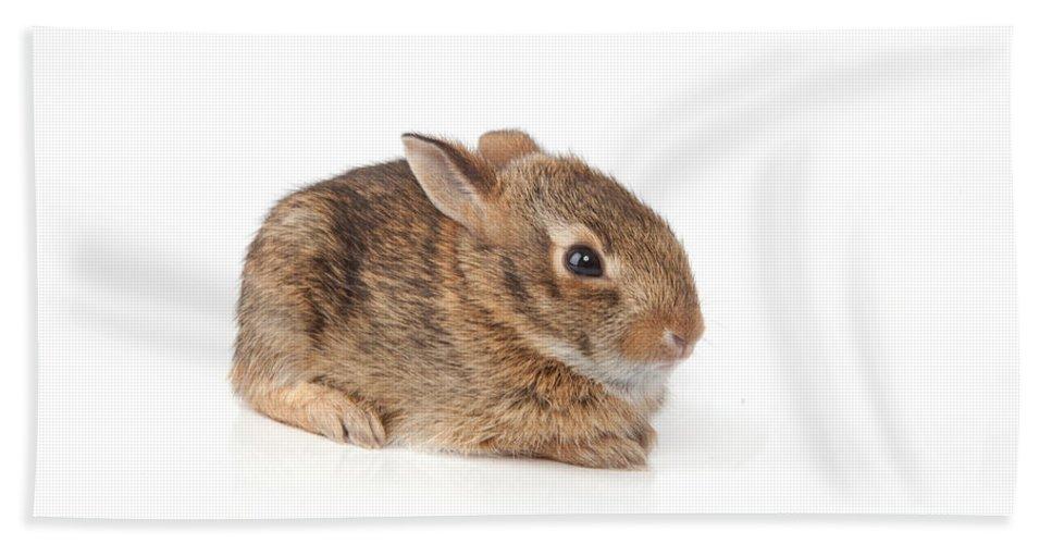 Mammal Bath Sheet featuring the photograph Rabbit by Scott Sanders