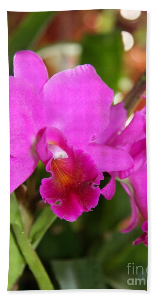 Orchid Hand Towel featuring the photograph Radiant Pink by Christiane Schulze Art And Photography