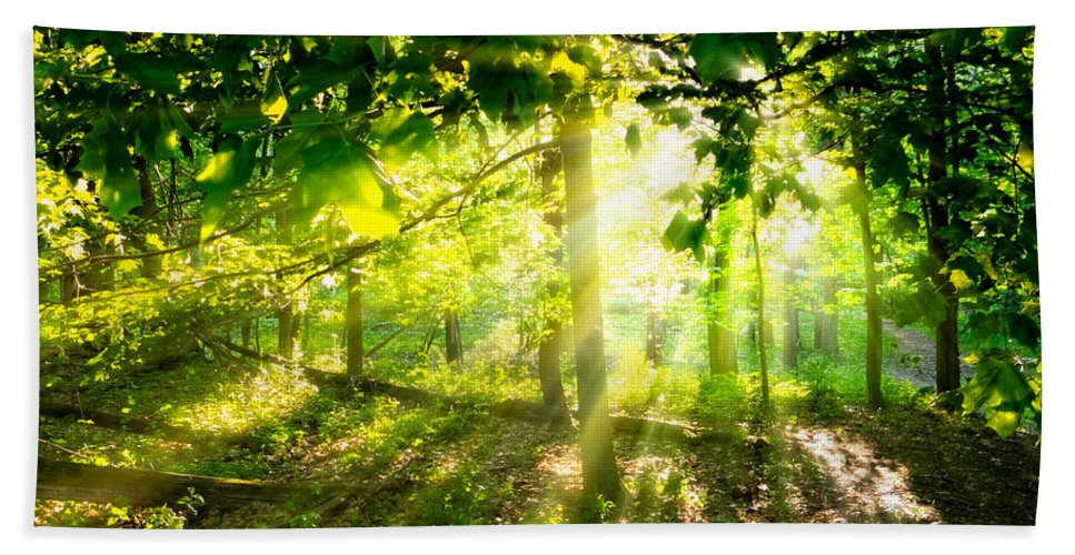 Michigan Bath Sheet featuring the photograph Radiant Sunlight Through The Trees by Lars Lentz