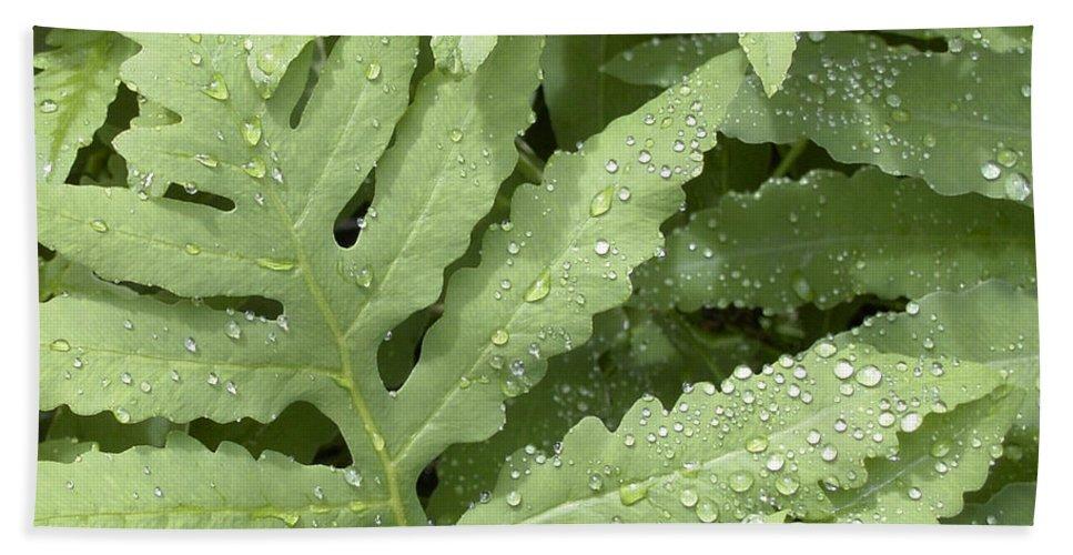 Rain Drops On Ferns Bath Sheet featuring the photograph Rain Drops On Ferns by Denyse Duhaime
